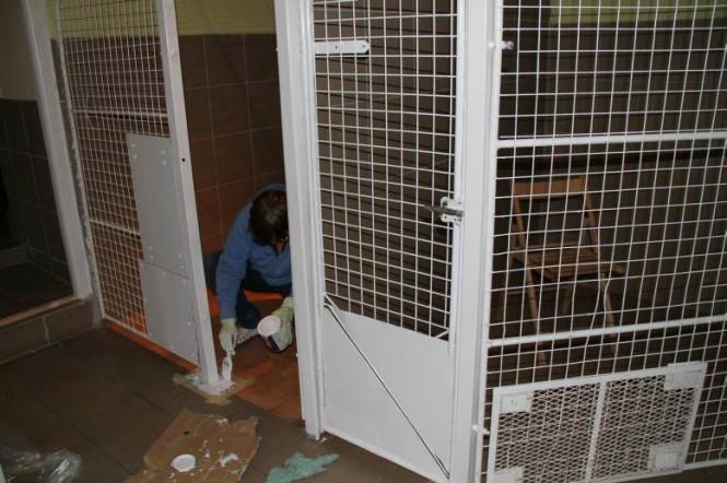 W dwóch salach szpitala znajduje się 8 boksów dla psów w trakcie leczenia oraz staruszków
